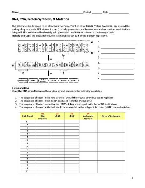 Protein Synthesis Worksheet Answers or Fresh Protein Synthesis Worksheet Answers Awesome Answering the
