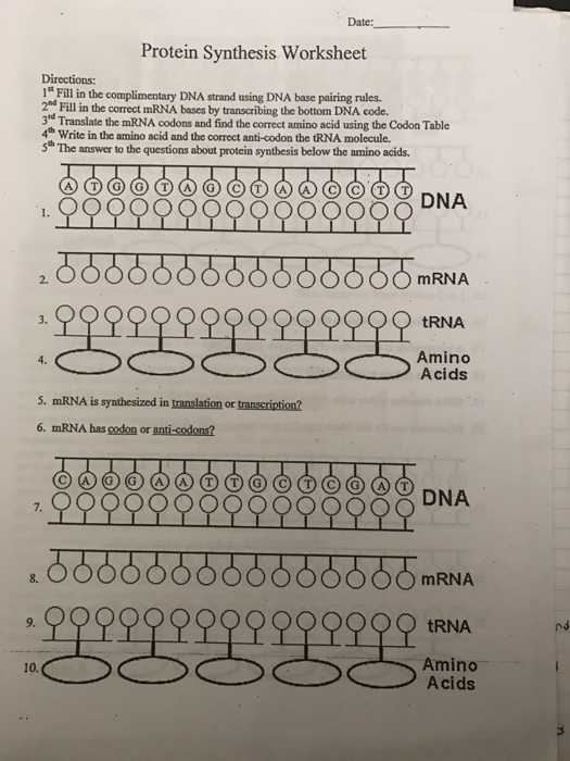 Protein Synthesis Worksheet Answers with Worksheets 49 Unique Transcription and Translation Worksheet Answers