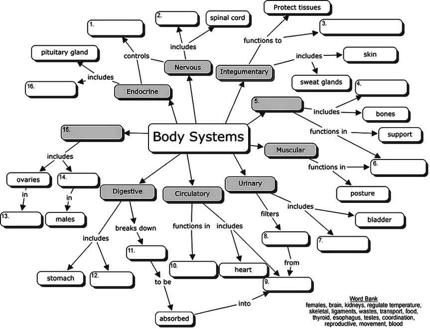 Skills Worksheet Concept Mapping Along with Body Systems Concept Map for Students to Fill In the Blanks