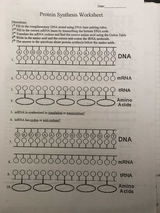 Transcription and Translation Worksheet Answers as Well as Mrna and Transcription Worksheet Inspirational Difference Between