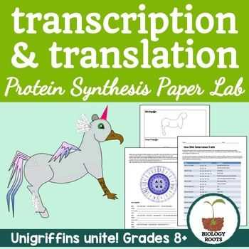Transcription Translation Worksheet together with Protein Synthesis Transcription and Translation