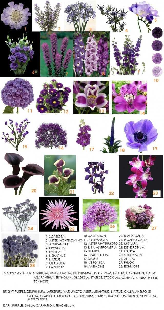Types Of Floral Arrangements Worksheet and 23 Best Flower Names Images On Pinterest