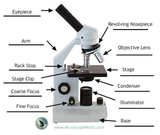 Using A Compound Light Microscope Worksheet or Labeling the Parts Of the Microscope Blank Diagram Available for