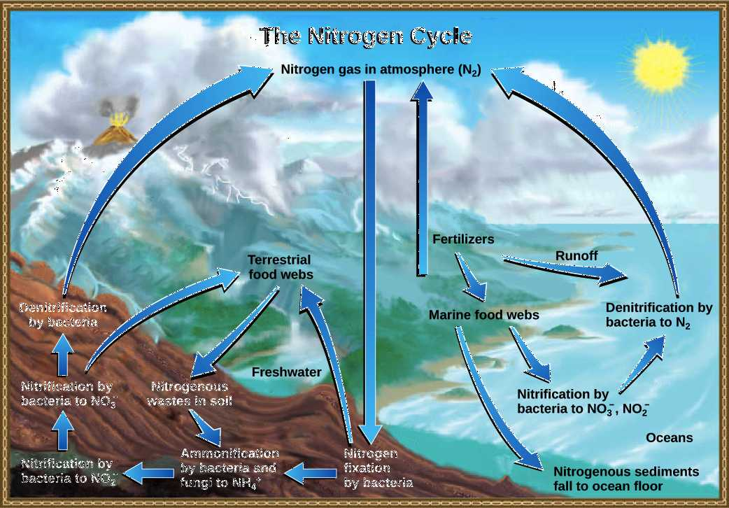 Water Carbon and Nitrogen Cycle Worksheet Answers and the Nitrogen Cycle Article Ecology