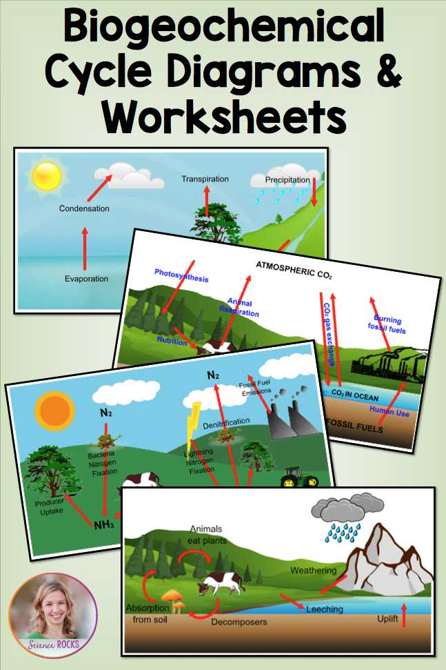 Water Carbon and Nitrogen Cycle Worksheet Answers or Biogeochemical Cycles Worksheets