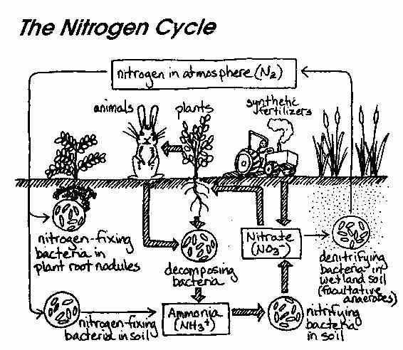 Water Carbon and Nitrogen Cycle Worksheet Answers with Water Carbon and Nitrogen Cycle Worksheet Answers Fresh Gas