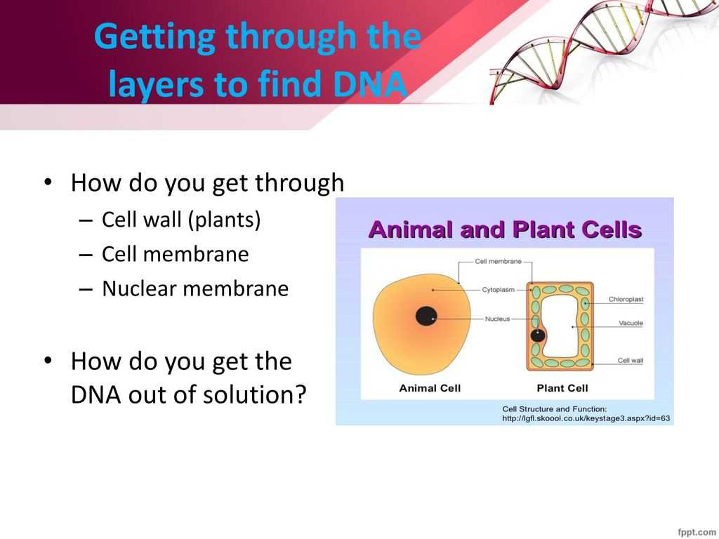 7.2 Cell Structure Worksheet Answer Key Biology or Berrieswith A Side Of Dna Ppt
