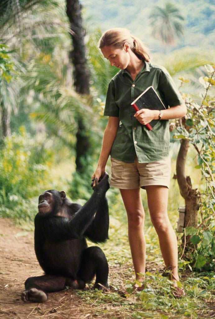 Among the Wild Chimpanzees Worksheet Answers or 43 Best Pics Images On Pinterest