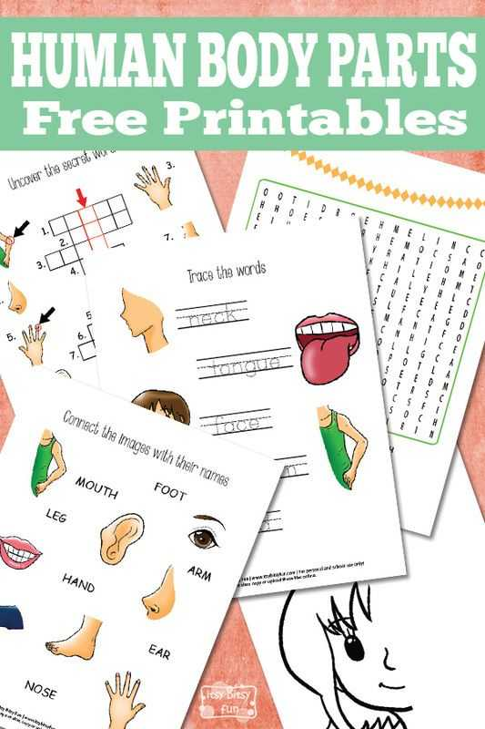 Body Image Worksheets as Well as 467 Best 10 Health Museum Images On Pinterest