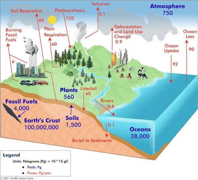 Carbon Cycle Worksheet Along with Carbon Cycle Diagram Stem Pinterest