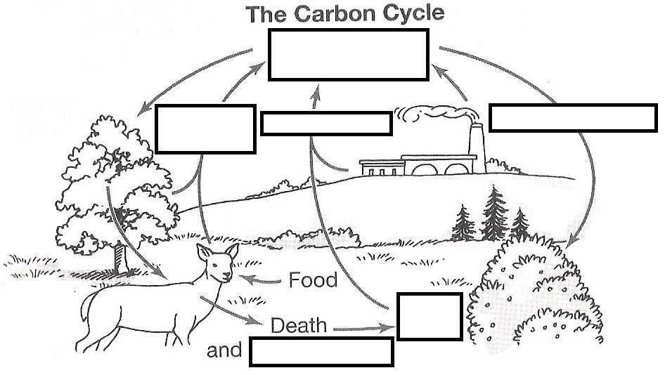 Carbon Cycle Worksheet Also Wizer Free Interactive Carbon Cycle Biology Cycles Blended