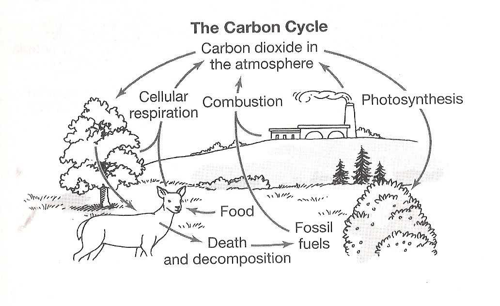 Carbon Cycle Worksheet Answers Along with Nitrogen Cycle Worksheet Answers New Carbon Cycle the Free