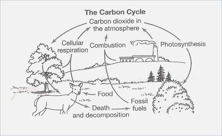 Carbon Cycle Worksheet Answers Along with the Carbon Cycle Worksheet Answers Worksheet Math for Kids