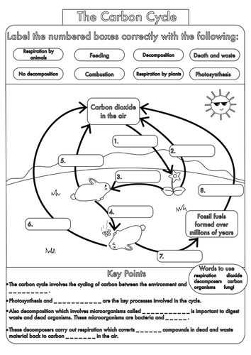 Carbon Cycle Worksheet with 55 Best Ecology Nutrient Cycles Images On Pinterest