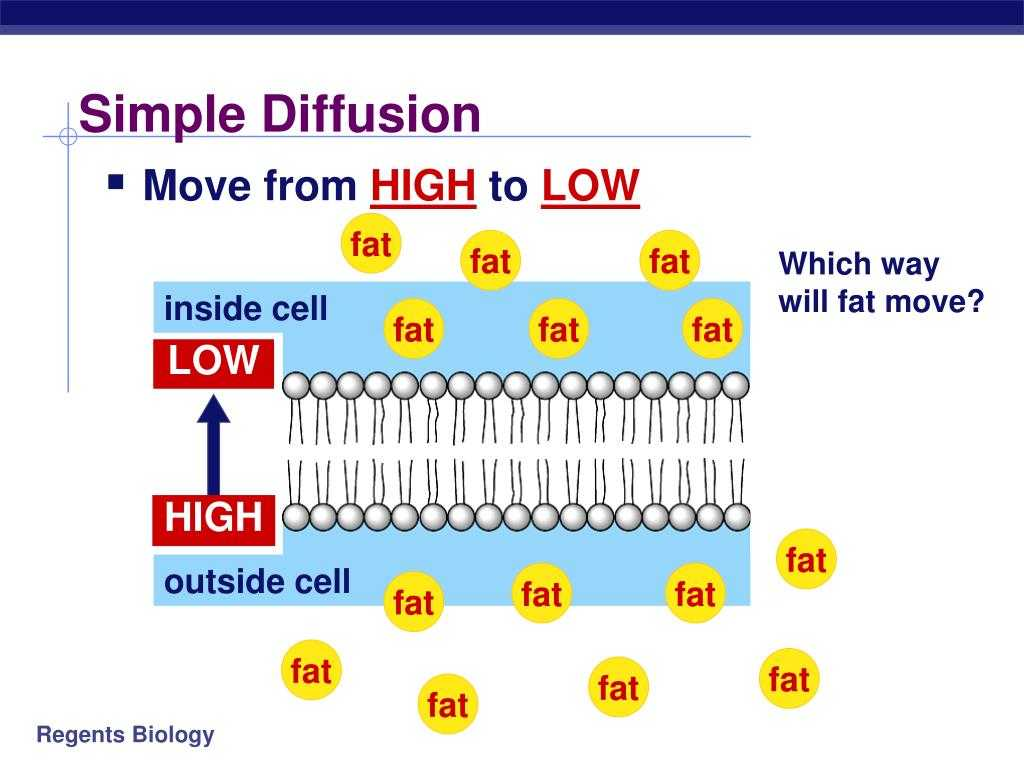 Cell Cycle Worksheet Answers as Well as Cell Diffusion Powerpoint Bing Images