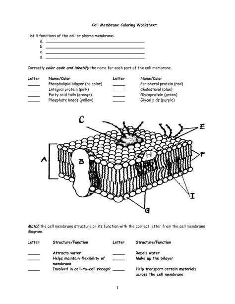 Cell Membrane Worksheet and Cell Membrane Worksheet Google Search