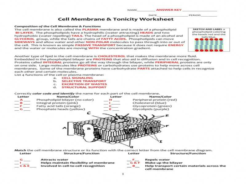 Cell Membrane Worksheet as Well as Beautiful Cell Membrane Coloring Worksheet Fresh Cell Membrane
