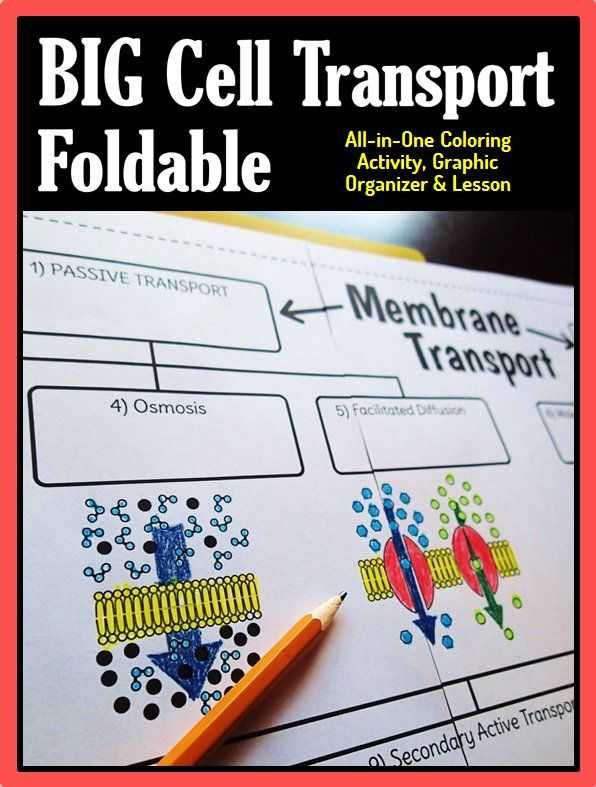 Cell Membrane Worksheet as Well as Cell Membrane Transport Big Foldable for Interactive Notebook or