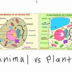 What Is A Cell Diagram Power Steering Gear Box Transport Worksheet Biology Answers As Well Simple Animal Best An