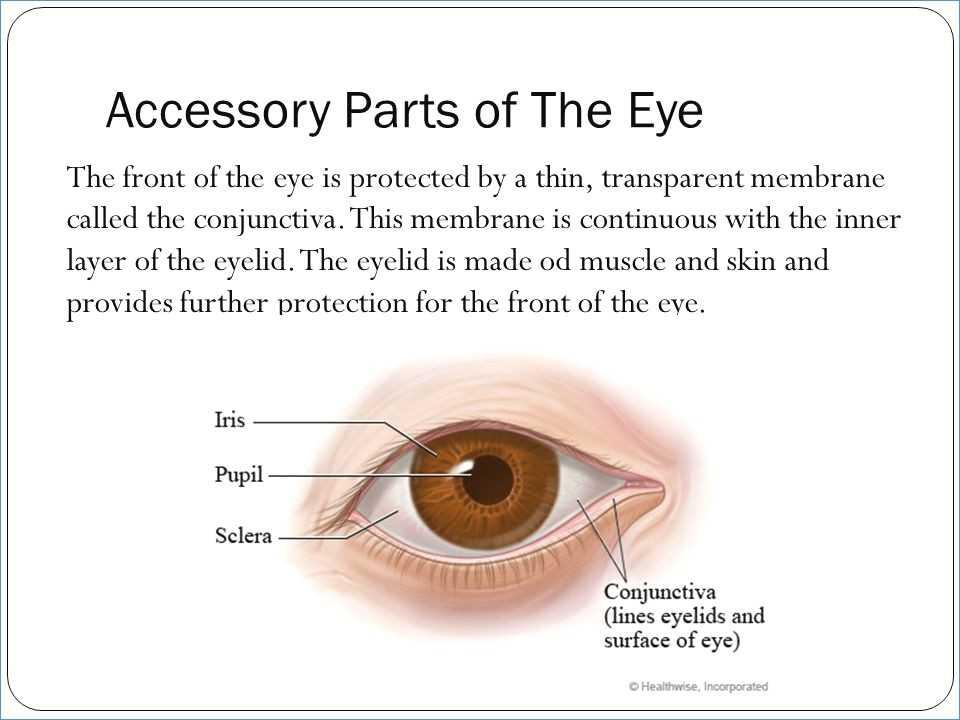 Cow Eye Dissection Worksheet Answers as Well as Ziemlich Anatomy the Human Eye Quiz Ideen Menschliche Anatomie