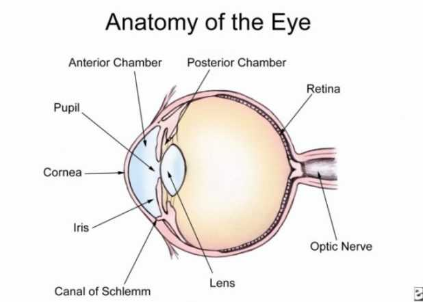 Cow Eye Dissection Worksheet Answers or Cow Eye Dissection Worksheet 7686f7312a9b Battk