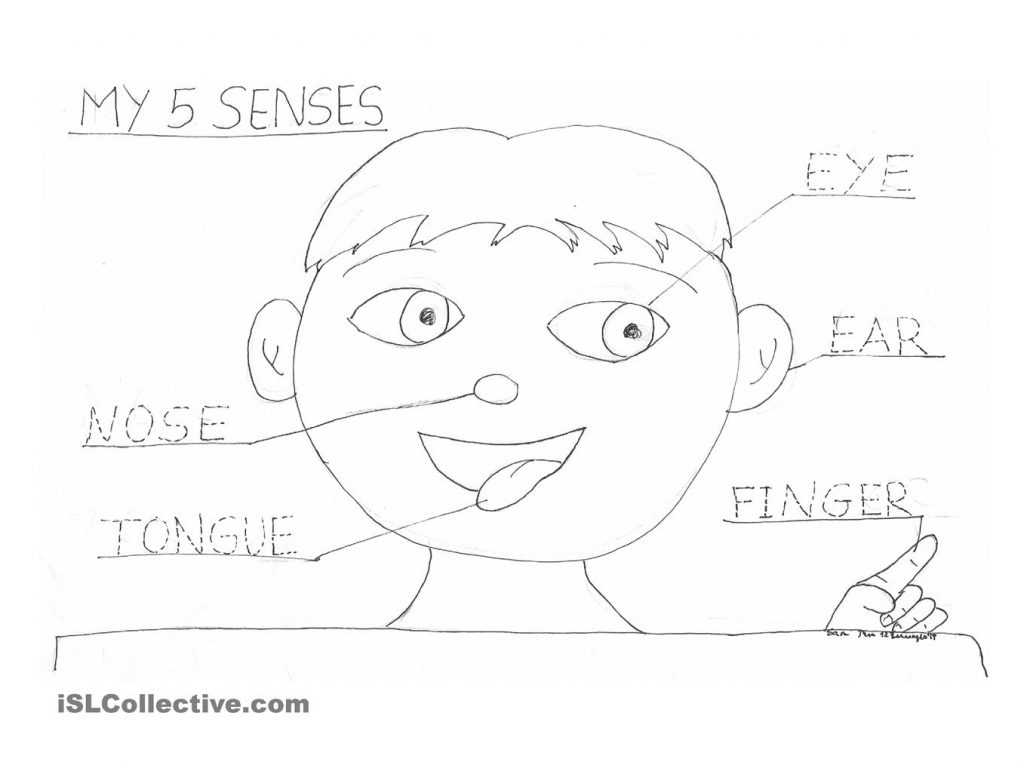 Dental Care Worksheets together with Senses Coloring Pages and Coloring Pages