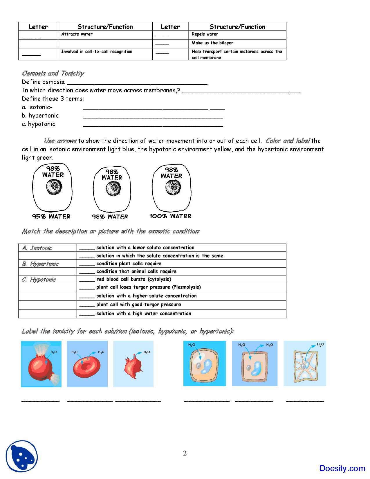 Diffusion and Osmosis Worksheet Answers as Well as Cell Transport Quiz Osmosis Diffusion Membrane Coloring Worksheet