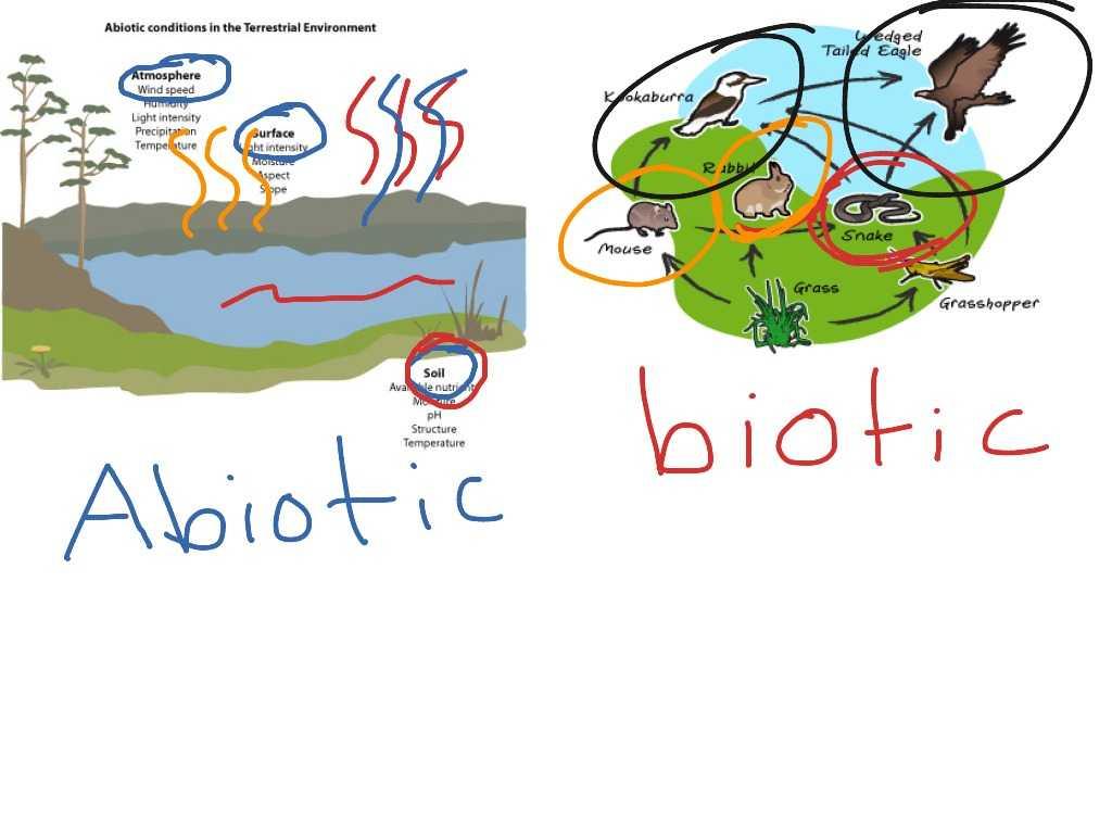 Diffusion and Osmosis Worksheet Answers Biology or Biotic Vs Abiotic Worksheet Super Teacher Worksheets
