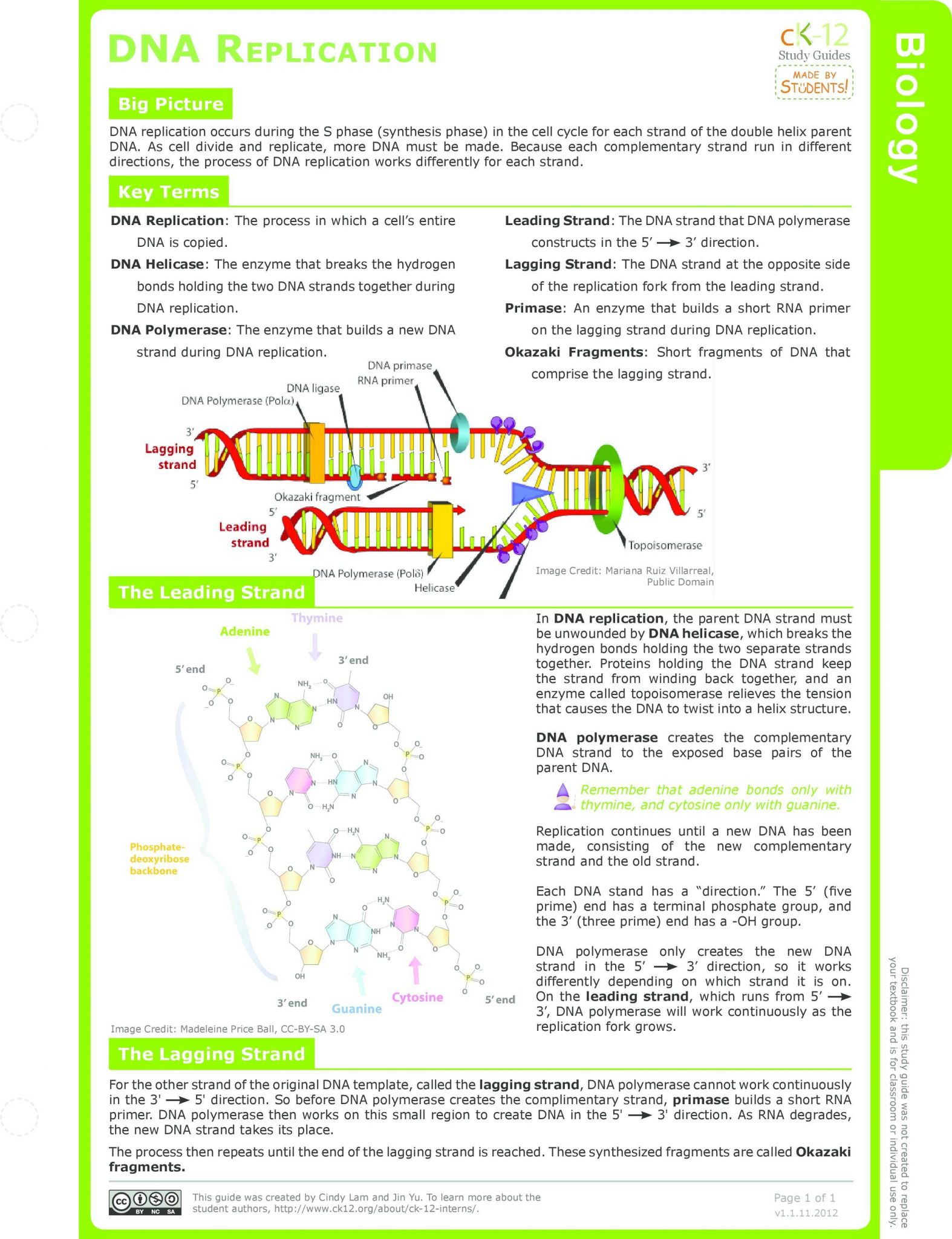 Dna Molecule and Replication Worksheet Answers as Well as 17 Luxury Dna Structure and Replication Worksheet Answers