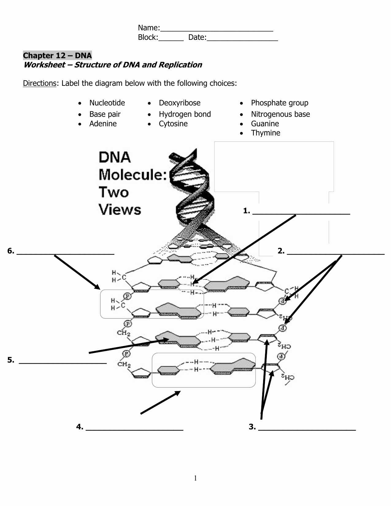 Dna Molecule and Replication Worksheet Answers with Dna Model Worksheet the Best Worksheets Image Collection