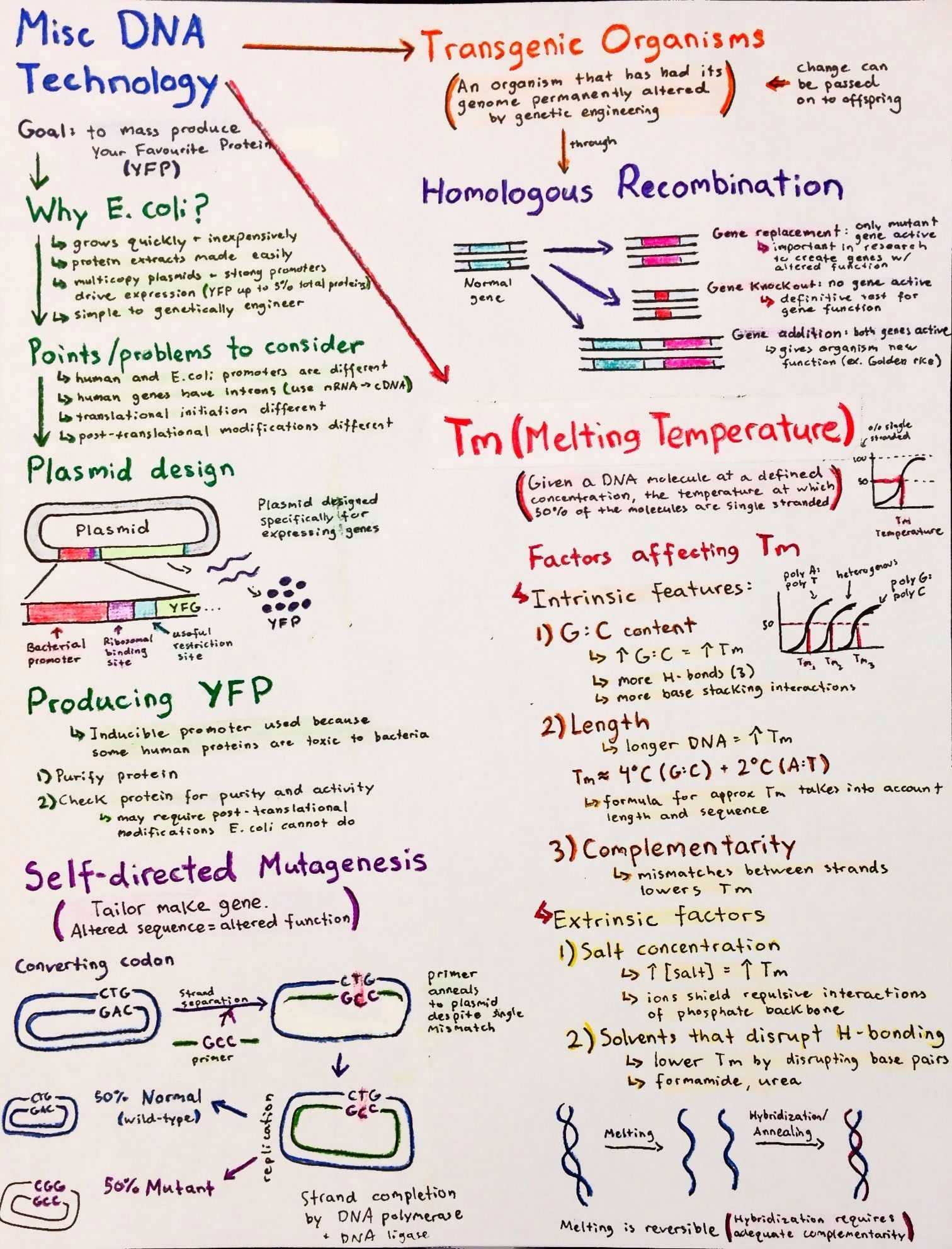 Dna Molecule and Replication Worksheet Answers with Introductory Biochemistry Flowcharts