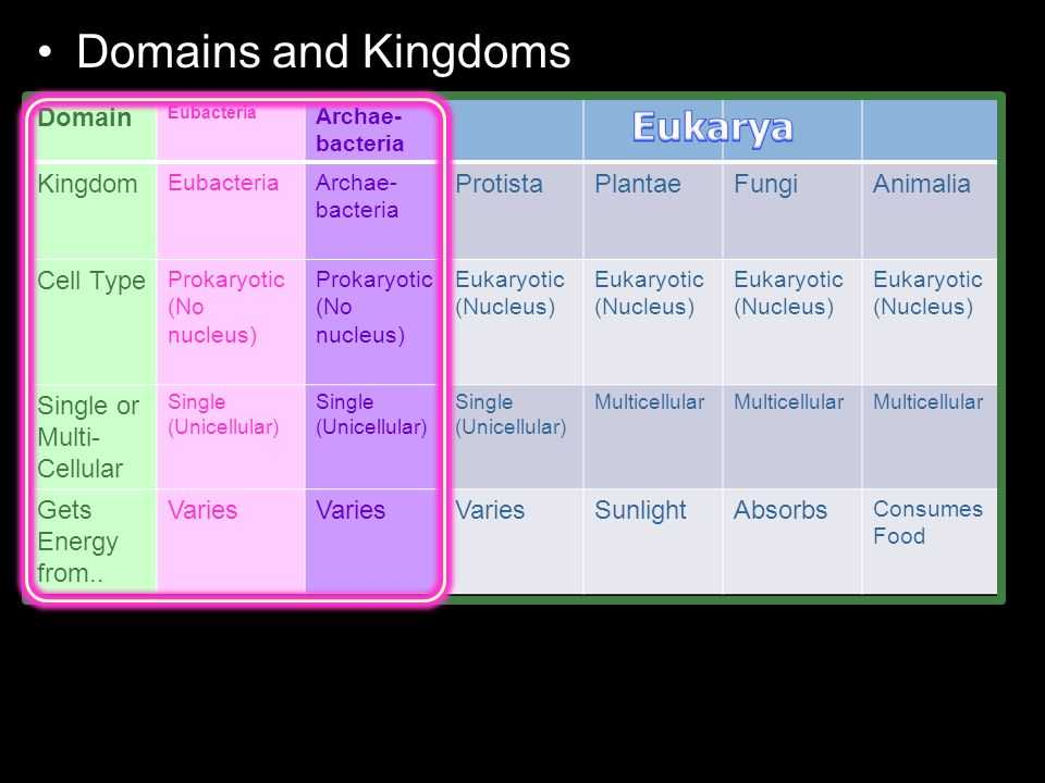 Domains and Kingdoms Worksheet Along with This Powerpoint is One Small Part Of My Taxonomy and Classification
