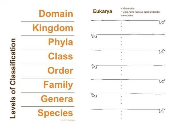 Domains and Kingdoms Worksheet and 70 Best Classification & Taxonomy Images On Pinterest