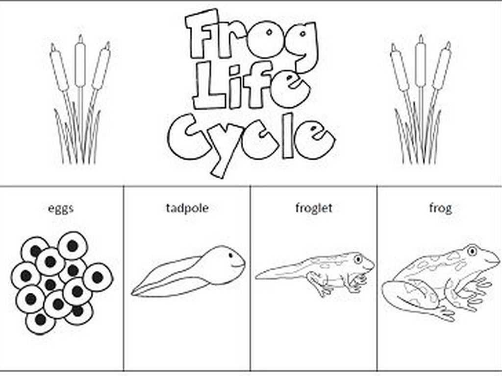 Life In the Trenches Worksheet and Worksheets Frog Life Cycle Worksheet Eurokaclira Free Work
