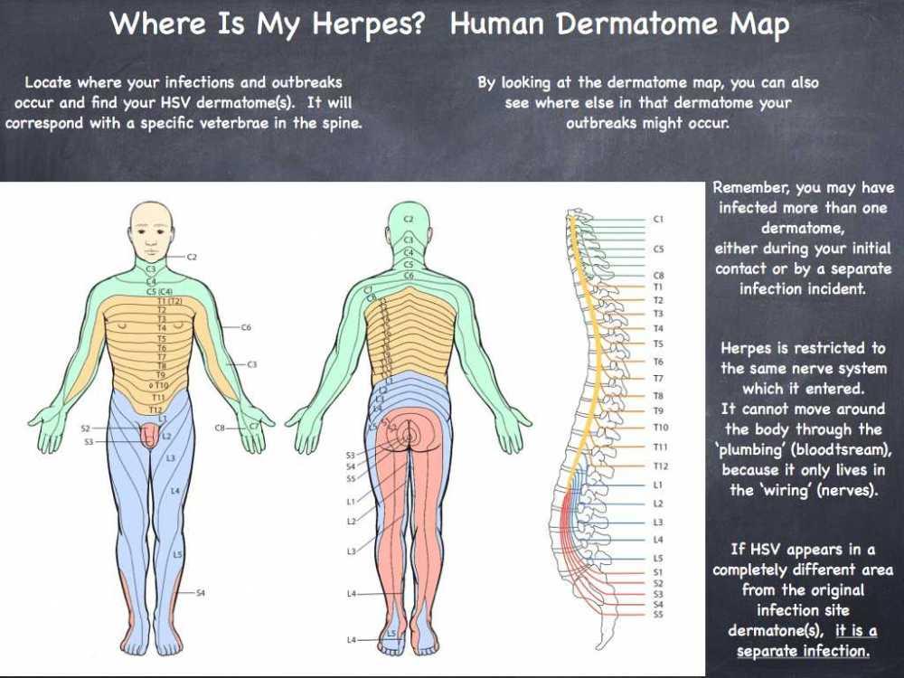 medium resolution of organization of the nervous system worksheet answers also shingles nerve pathways diagram nervous system