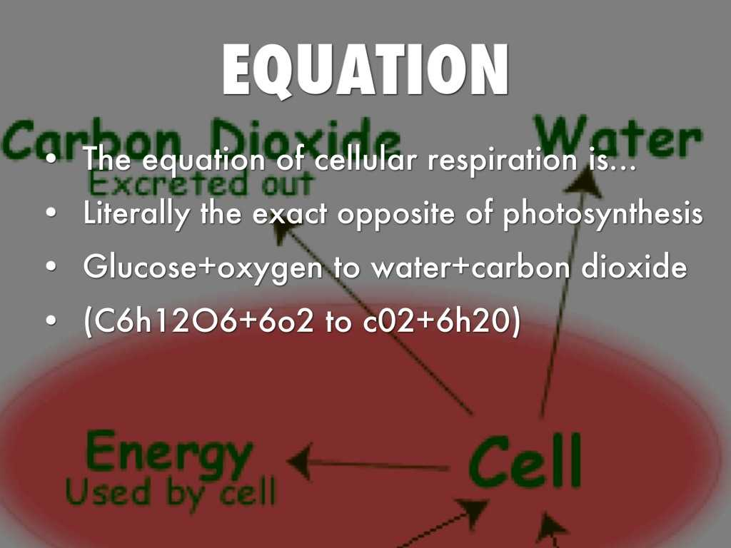 Photosynthesis & Cellular Respiration Worksheet Answers together with Opposite Of Synthesis Bing Images
