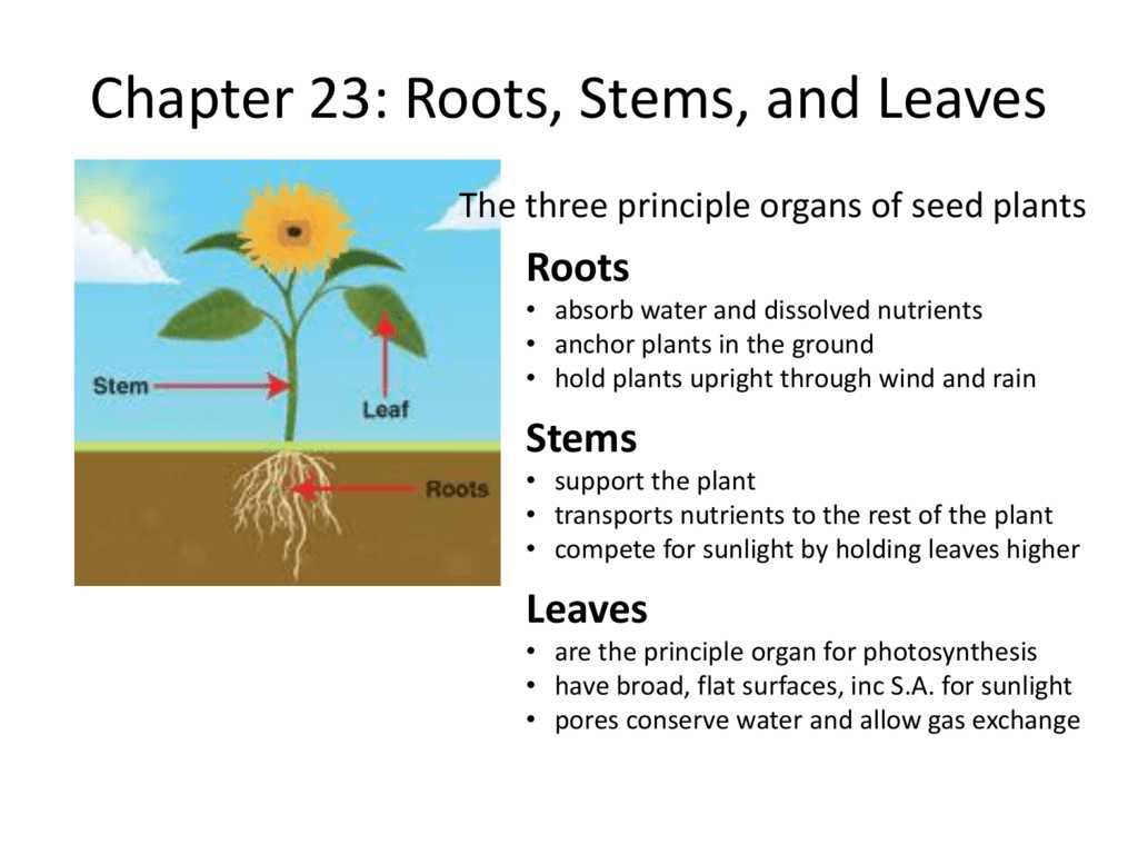 Plant Structure and Function Worksheet Answers Along with Leaves Worksheet Biology Galleryhip the Hippest Pi