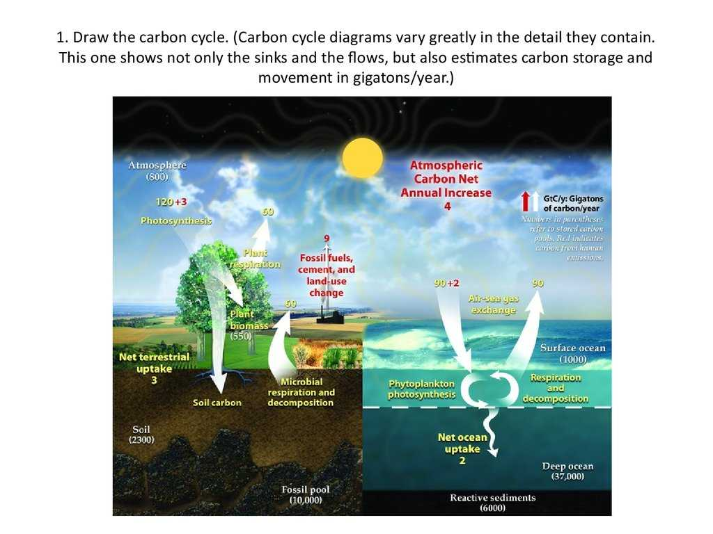 The Carbon Cycle Worksheet Answers Along with Carbon Cycling Online Presentation