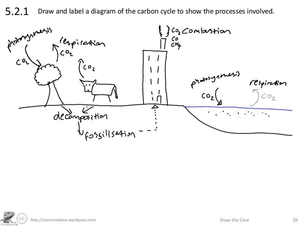 The Carbon Cycle Worksheet Answers with Sciencevideos Draw the Core
