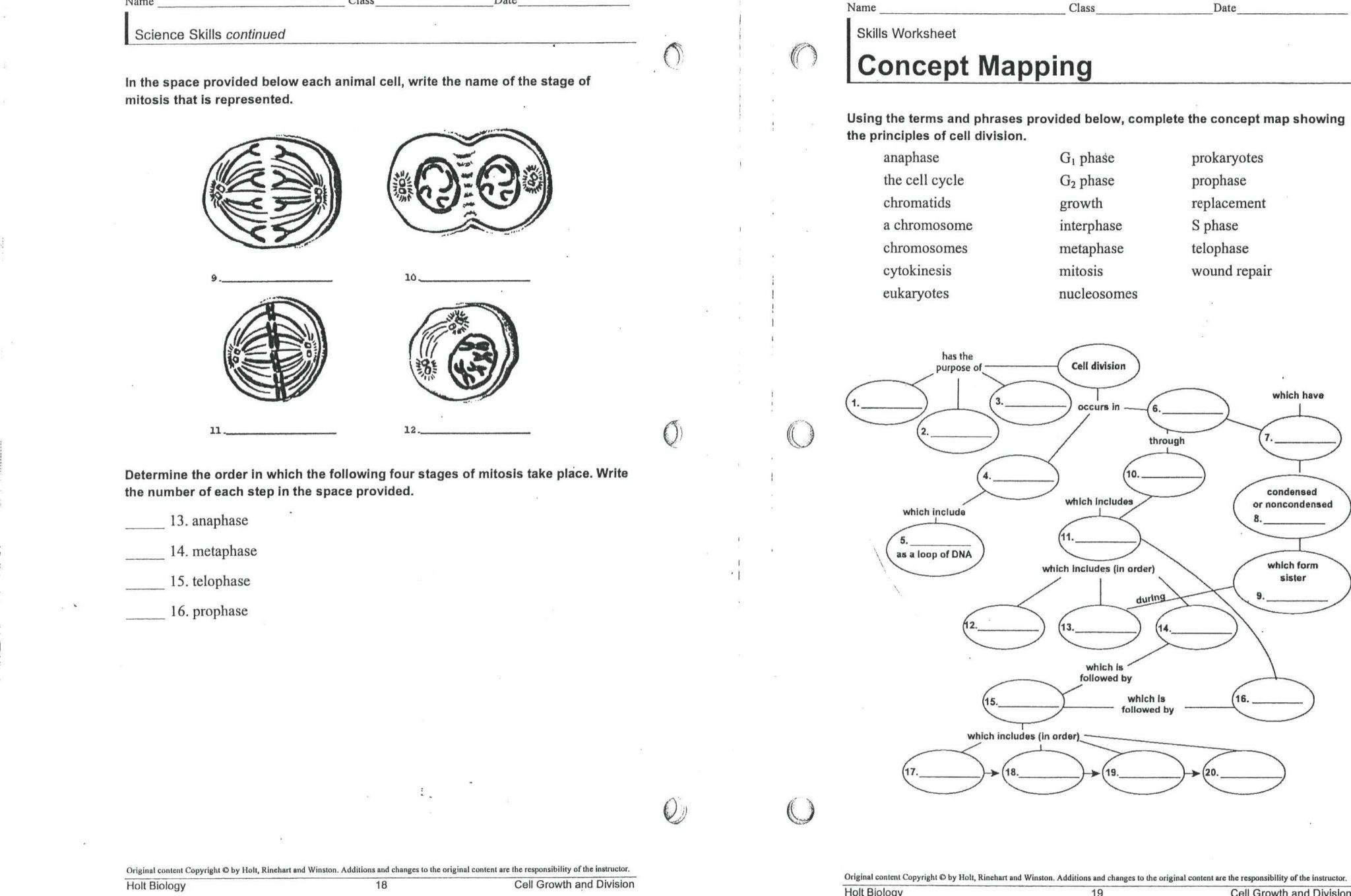 Cell Cycle Worksheet Answers Biology