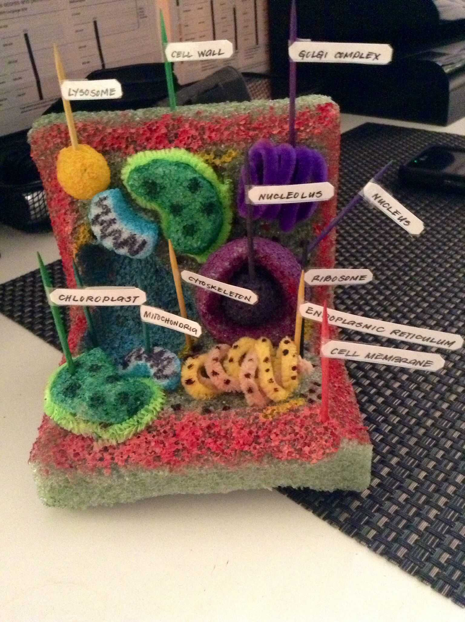 Cell organelles Worksheet with My Plant Cell Project Made Of Styrofoam Pipe Cleaners toothpicks