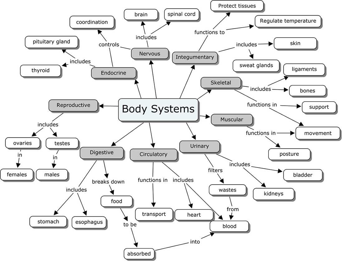 Digestion Worksheet Answer Key and organ Systems Concept Map