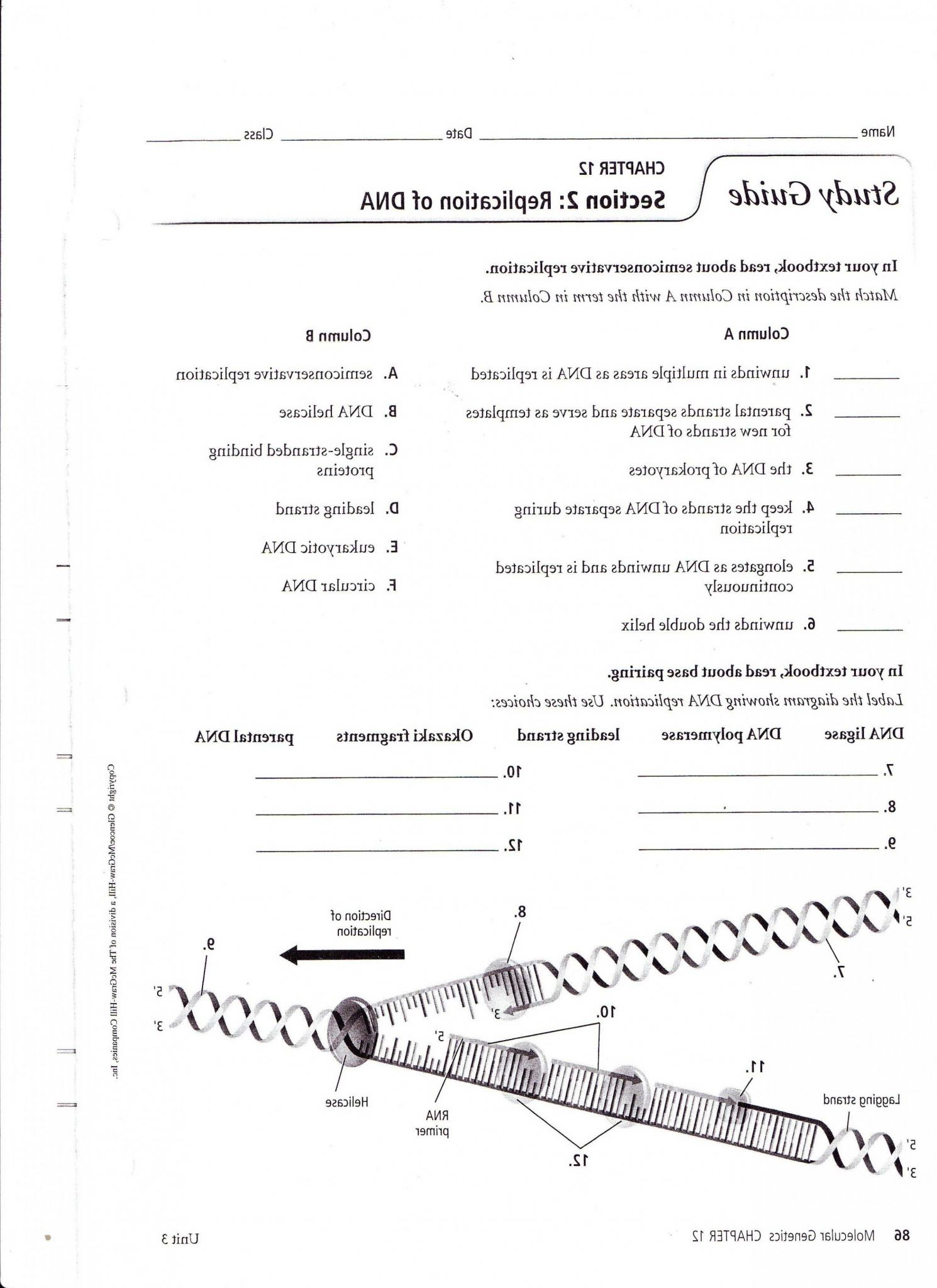 Dna Replication Worksheet Pdf as Well as 25 Unique Dna Structure Worksheet Answers