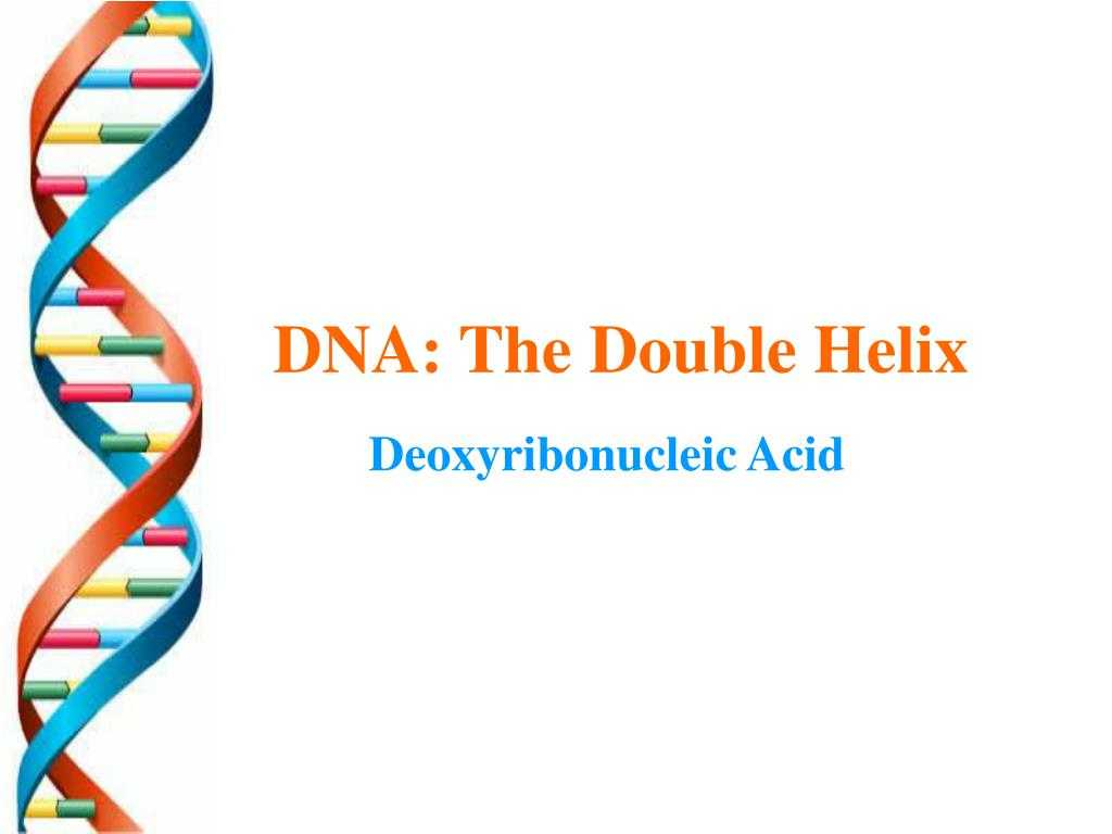 Dna the Double Helix Worksheet Answers Along with Ppt Dna the Double Helix Powerpoint Presentation Id672