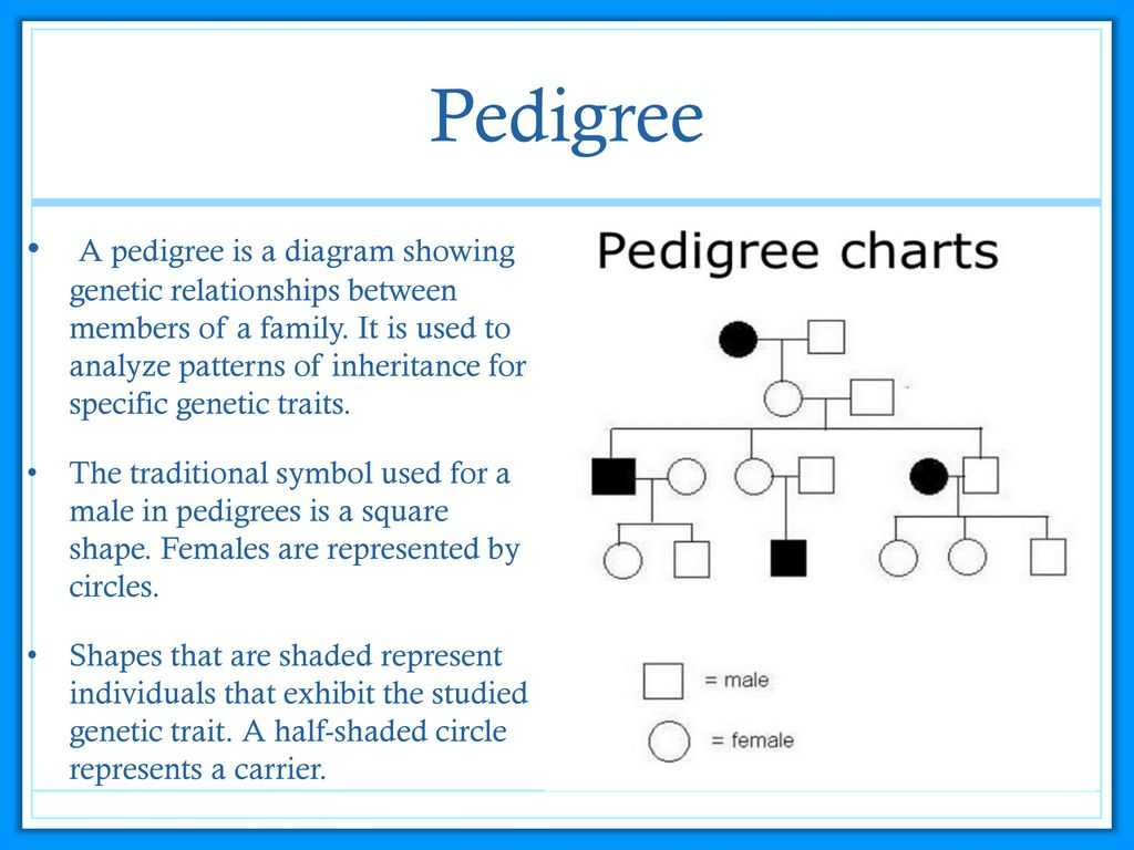 Genetic Disorders Problem Pregnancies Worksheet Answers or Human Genetic Disorders Ppt