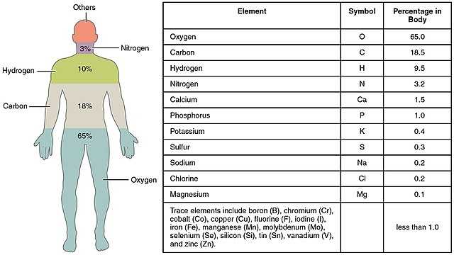 Human Body Worksheets or File 201 Elements Of the Human Body 01 Wikimedia Mons