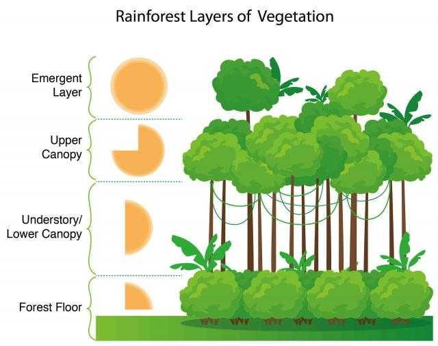 Layers Of the Rainforest Worksheet Along with Climate and Ecosystems the Geographer Online