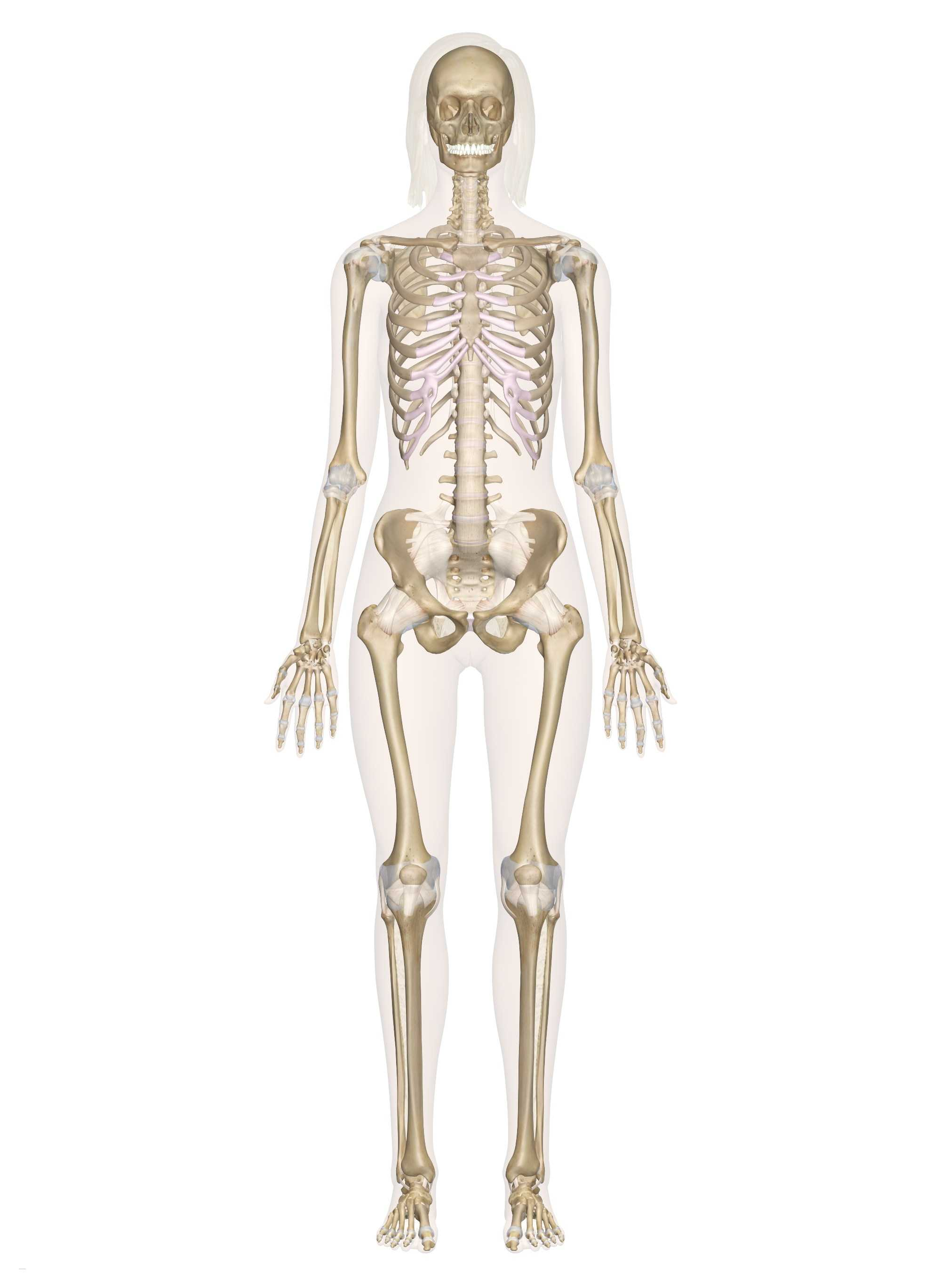 Skull Labeling Worksheet And 34 Brilliant Skeleton
