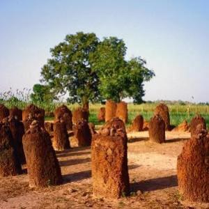 semestafakta-The Senegambian Stone Circles