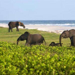 semestafakta-the Loango National Park3